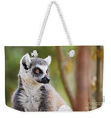 Ring-tailed Lemur Closeup Weekender Tote Bag