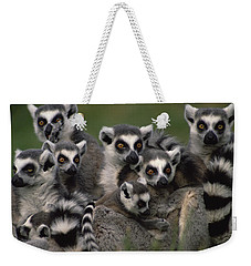 Weekender Tote Bag featuring the photograph Ring-tailed Lemur Lemur Catta Group by Gerry Ellis
