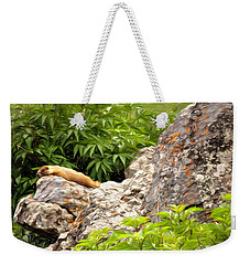 Rock Chuck Weekender Tote Bag by Lana Trussell