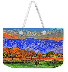 Weekender Tote Bag featuring the photograph Rocky Mountain Deer by Scott Mahon