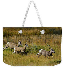 Weekender Tote Bag featuring the photograph Rocky Mountain Goats 7410 by Donald Brown