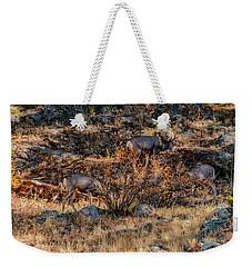Rocky Mountain National Park Deer Colorado Weekender Tote Bag