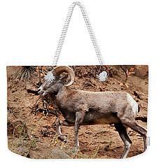 Rocky Mt. Big Horn Sheep Weekender Tote Bag