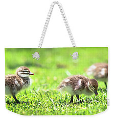 Weekender Tote Bag featuring the photograph Rogue Duckling, Yanchep National Park by Dave Catley