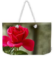 Red Rose Wall Art Print Weekender Tote Bag by Carol F Austin