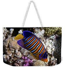 Royal Angelfish Macro 3 Weekender Tote Bag