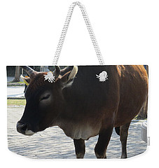Weekender Tote Bag featuring the photograph Sacred Cow 2 by Randall Weidner
