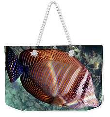 Sailfin Tang Makadi Bay Weekender Tote Bag