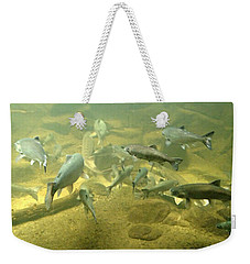 Salmon And Sturgeon Weekender Tote Bag by Katie Wing Vigil