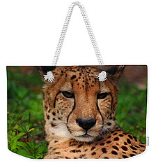 Weekender Tote Bag featuring the photograph Samson by Michiale Schneider