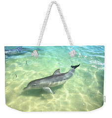 Weekender Tote Bag featuring the photograph Samu 1 , Monkey Mia, Shark Bay by Dave Catley