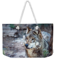 Sancho Searching The Area Weekender Tote Bag by Elaine Malott