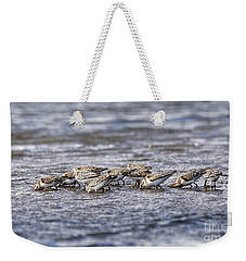 Weekender Tote Bag featuring the photograph Sandpipers Heads Down by Sue Harper