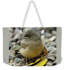 Say's Phoebe Fledgling Weekender Tote Bag