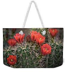 Weekender Tote Bag featuring the photograph Scarlet Hedgehog Cactus  by Saija Lehtonen