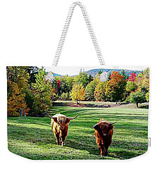 Weekender Tote Bag featuring the photograph Scottish Highland Cattle - New Hampshire Fall Foliage by Joseph Hendrix