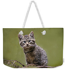 Scottish Wildcat Kitten Weekender Tote Bag