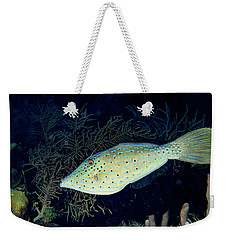 Weekender Tote Bag featuring the photograph Scrawled Filefish by Jean Noren