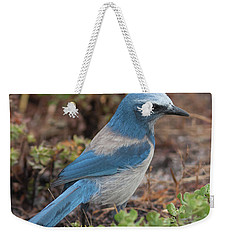 Scrub Jay Framed In Green Weekender Tote Bag