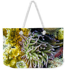 Weekender Tote Bag featuring the photograph Sea Anemone And Squirrelfish by Perla Copernik