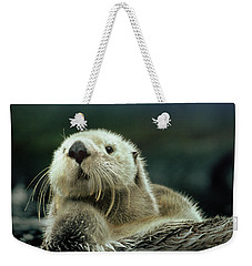 Sea Otter  Weekender Tote Bag by Tim Fitzharris