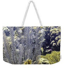Weekender Tote Bag featuring the photograph Sea Plumes Coral 2 by Perla Copernik
