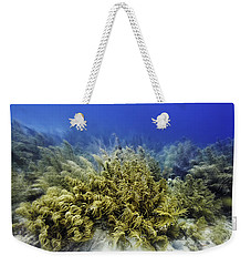 Weekender Tote Bag featuring the photograph Sea Rod Corals  by Perla Copernik