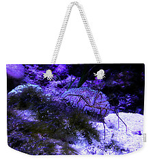 Weekender Tote Bag featuring the photograph Sea Spider by Francesca Mackenney
