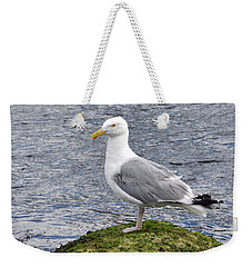 Weekender Tote Bag featuring the photograph Seagull Posing by Glenn Gordon