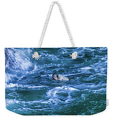 Weekender Tote Bag featuring the photograph Seal In Teh Water by Jonny D