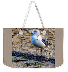 Weekender Tote Bag featuring the photograph See The Gull by Kendall McKernon