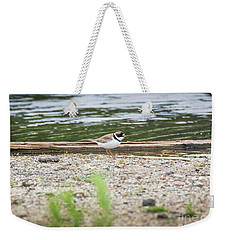 Weekender Tote Bag featuring the photograph Semipalmated Plover by Ricky L Jones