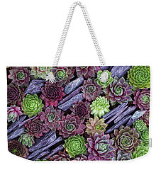 Weekender Tote Bag featuring the photograph Sempervivums Pattern by Tim Gainey