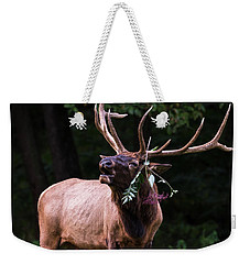 Weekender Tote Bag featuring the photograph Serenade  by Andrea Silies
