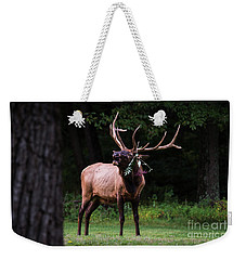 Weekender Tote Bag featuring the photograph Serenading by Andrea Silies