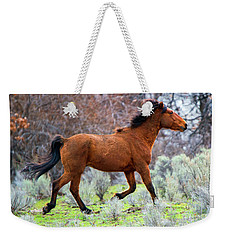 Weekender Tote Bag featuring the photograph Shaggy And Proud by Mike Dawson