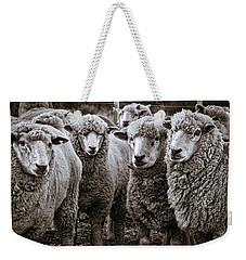 Sheep #2 - Patagonia Weekender Tote Bag by Stuart Litoff