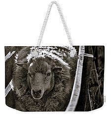 Sheep Through The Chute - Patagonia Weekender Tote Bag by Stuart Litoff