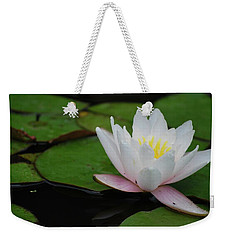 Weekender Tote Bag featuring the photograph Shining Bright by Amee Cave