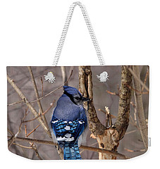 Shy Blue Jay  Weekender Tote Bag by David Porteus