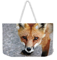 Weekender Tote Bag featuring the photograph Shy Red Fox  by Debbie Oppermann