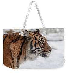Side Portrait Of A Sumatran Tiger In The Snow Weekender Tote Bag