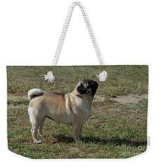 Side View Of A Pug Dog Weekender Tote Bag by DejaVu Designs