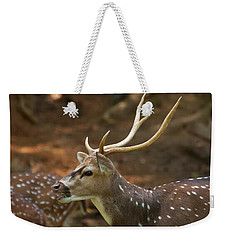 Weekender Tote Bag featuring the photograph Sika Deer Chewing Grass by Chris Flees