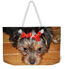 Silky Terrier Puppy Face Weekender Tote Bag