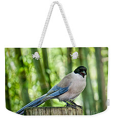 Weekender Tote Bag featuring the photograph Sing Out Loud by Judy Kay