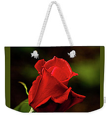 Weekender Tote Bag featuring the photograph Single Red Rose Bud by Jacqi Elmslie