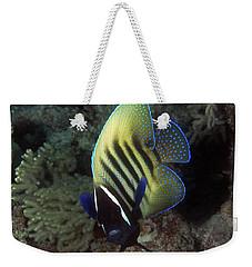 Six Banded Angelfish, Great Barrier Reef Weekender Tote Bag