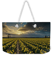 Weekender Tote Bag featuring the photograph Skagit Daffodils Golden Sunstar Evening by Mike Reid