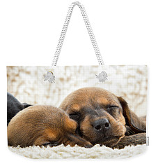 Weekender Tote Bag featuring the photograph Sleeping Dachshund Puppies by SR Green
